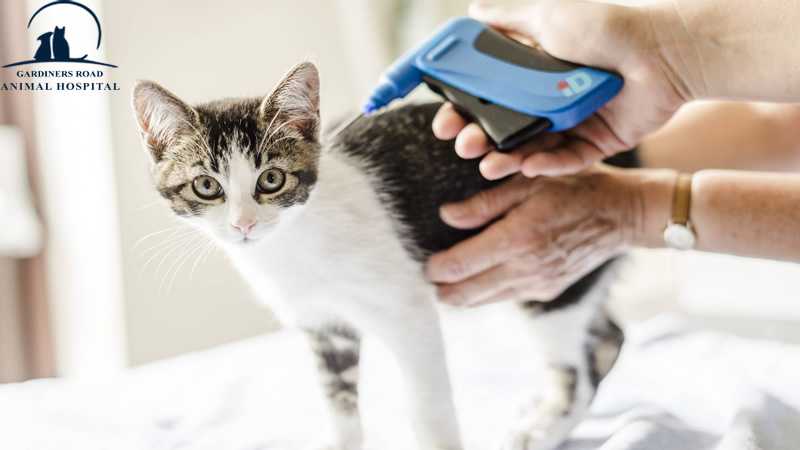 Micro-Chip Service in Kingston: Why Should Indoor Cats be Microchipped