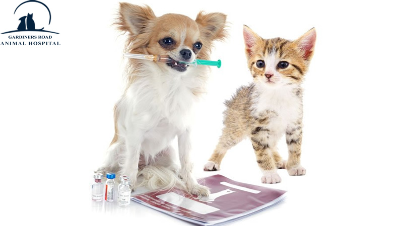 AnimalHospitalKingston | PetMicroChipKingston |  VetClinicsKingston | AllergiesInDogKingston | PetEmergencyCareKingston | PetXRayKingston |  DogDentistryKingston |  DogVaccinesKingston | 24HoursAnimalHospitalKingston | VomitingAndDiarrheaInDogsAndCatsKingston | SkinInfectionInDogKingston | VetsOpenOnWeekendsKingston | LowCostCatVaccines | FoodAllergyInCatKingston | PuppyVaccinesKingston | VetsInKingston | PetPreventiveCareKingston | PetPreventiveServicesKingston | SpayInKingston | ParasiteControlService | PetDentistryKingston | SpayAndNeuterKingston | PetPharmacyKingston | CatAndDogNutrition | PetDentalCareKingston | PetVaccinationKingston