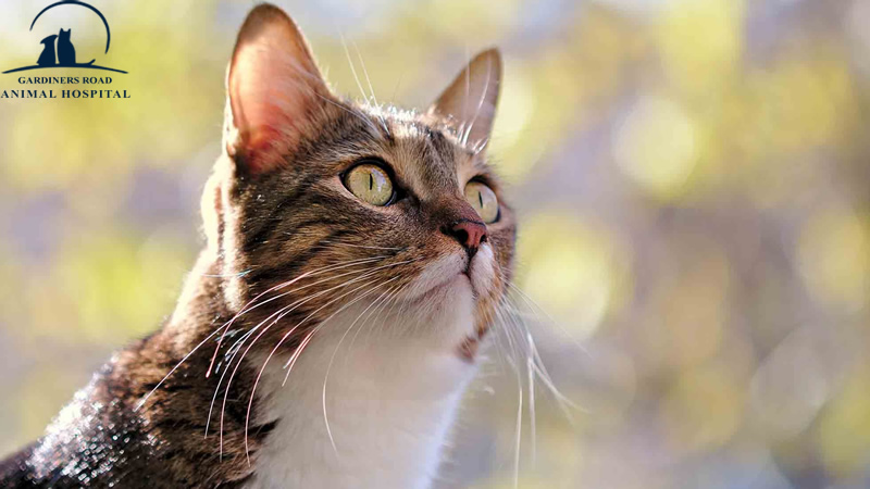 There are more broad preventive choices that can stop the spread of heartworms in cats in districts where mosquitoes are dynamic