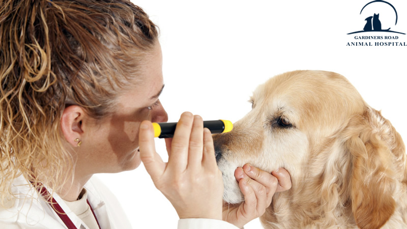 Important method of prevention is to have your canine's eyes checked regularly by your vet at the vet clinic in Kingston