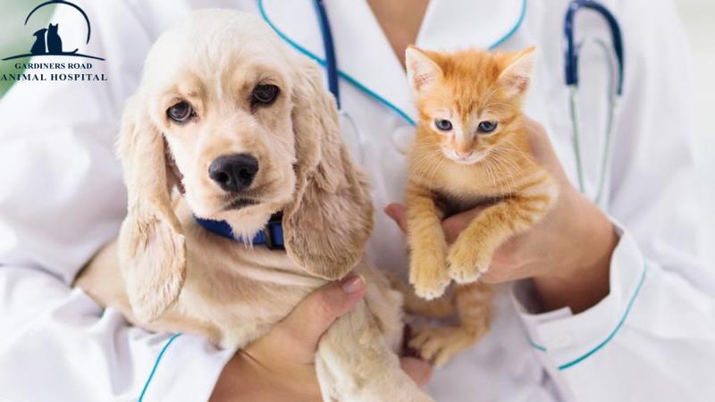 AnimalHospitalKingston | PetXRayKingston |  VetClinicsKingston | AllergiesInDogKingston | PetEmergencyCareKingston | PetXRayKingston |  DogDentistryKingston |  DogVaccinesKingston |  VetsInKingston | PetPreventiveCareKingston | PetPreventiveServicesKingston | ParasiteControlService | PetDentistryKingston | SpayAndNeuterKingston | PetPharmacyKingston | CatAndDogMicrochipping | PetDentalCareKingston | PetXrayServiceKingston | PetSurgeryKingston | PetSurgeryServiceKingston | SpayAndNeterKingston | SpayingAndNeuteringPets | SpayNeuterKingston