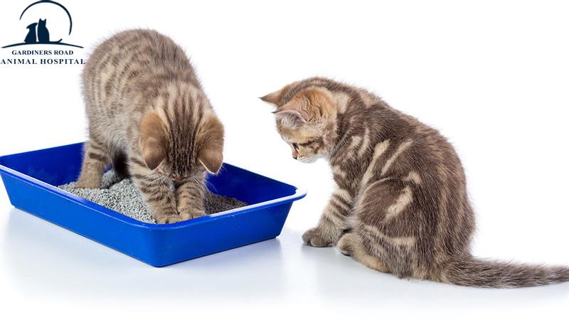AnimalHospitalKingston | PetNutritionKingston |  VetClinicKingston | AllergiesInDogKingston | PetEmergencyCareKingston | PetXRayKingston |  DogVaccinesKingston |  VetsInKingston | ParasiteControlService | PetDentistryKingston | SpayAndNeuterKingston | PetPharmacyServiceKingston | PetLabKingston | PetDentalCareKingston | PetXrayKingston | PetPharmacyKingston |  PetEmergencyCareKingston | PetLaboratoryKingston