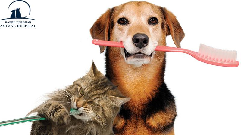 AnimalHospitalKingston | PetNutritionKingston |  VetClinicsKingston | AllergiesInDogKingston | PetEmergencyCareKingston | PetXRayKingston |  DogDentistryKingston |  DogVaccinesKingston |  VetsInKingston | PetPreventiveCareKingston | PetPreventiveServicesKingston | ParasiteControlService | PetDentistryKingston | SpayAndNeuterKingston | PetPharmacyKingston | CatAndDogMicrochipping | PetDentalCareKingston | PetXrayServiceKingston | PetSurgeryKingston | NutritionServiceInKingston | PeDentalCareKingston | PetDentistrykingston | PetEmergencyCareKingston
