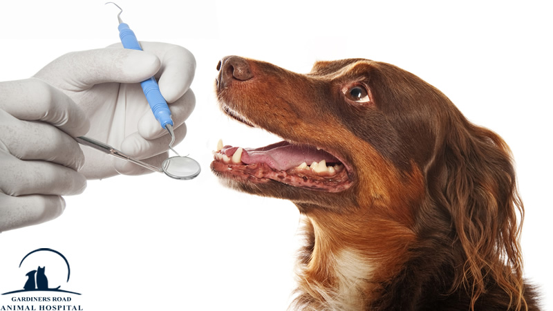 AnimalHospitalInKingston | DentalCleaningsKingston |  VetClinicKingston | AllergiesInDogKingston | AnimalSKinProblems | PetEmergencyCareKingston | PetXRayKingston |  PetNutritionKingston |  VetsInKingston | ParasiteControlService | PetDentistryKingston | SpayAndNeuterKingston | PetLaboratoryKingston | PetLabKingston | PetDentalCareKingston | PetXrayKingston | PetPharmacyKingston |  EmergencyCareKingston | PetVaccinationKingston | AnimalVaccinesInKingston | PetMicroChipKingston | NutritionServiceInKingston