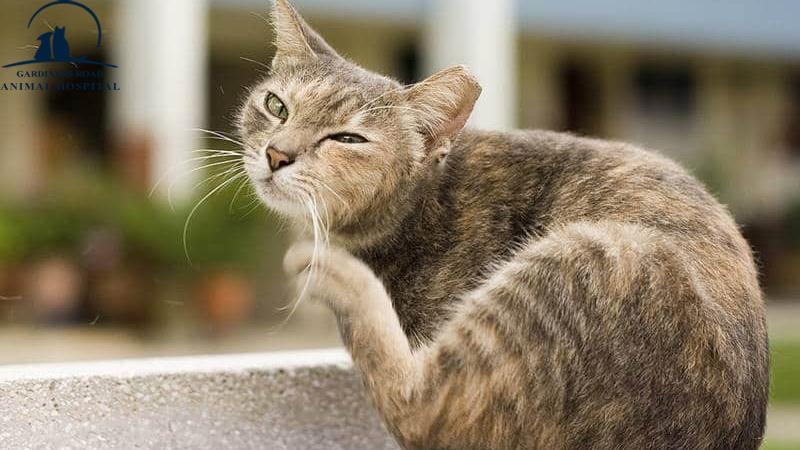 AnimalHospitalInKingston | DentalCleaningsKingston |  VetClinicKingston | AllergiesInDogKingston | AnimalSKinProblems | PetEmergencyCareKingston | PetXRayKingston |  PetNutritionKingston |  VetsInKingston | ParasiteControlService | PetDentistryKingston | SpayAndNeuterKingston | PetLaboratoryKingston | PetLabKingston | PetDentalCareKingston | PetXrayKingston | PetPharmacyKingston |  EmergencyCareKingston | PetVaccinationKingston | AnimalVaccinesInKingston | PetMicroChipKingston | ParasiteControlServiceKingston