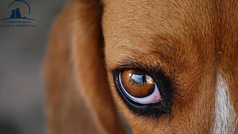AnimalHospitalInKingston | DentalCleaningsKingston |  VetClinicKingston | AllergiesInDogKingston | AnimalSKinProblems | PetEmergencyCareKingston | PetXRayKingston |  PetNutritionKingston |  VetsInKingston | ParasiteControlService | PetDentistryKingston | SpayAndNeuterKingston | AnimalSkinProblems | AnimalAllergiesKingston | EnvironmentalAllergiesInDogsKingston | PetLaboratoryKingston | PetLabKingston | PetDentalCareKingston | PetXrayKingston | PetPharmacyKingston |  EmergencyCareKingston | PetVaccinationKingston | DogDentalCareKingston | PetMicroChipKingston | YearlyHealthExamService