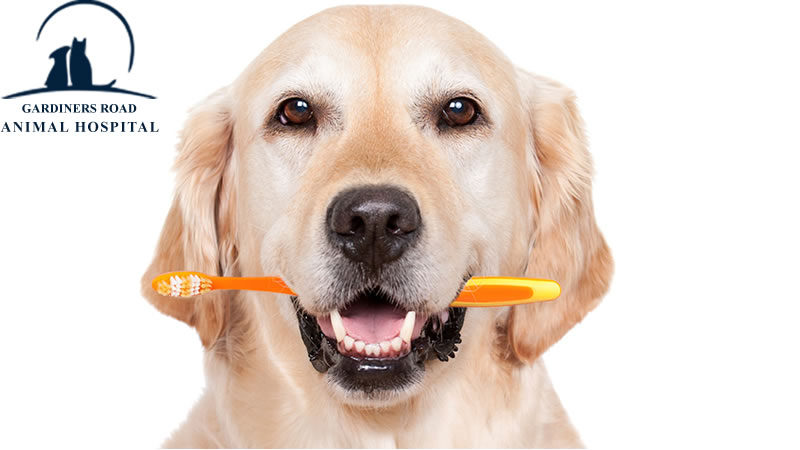 Pet-dental-care