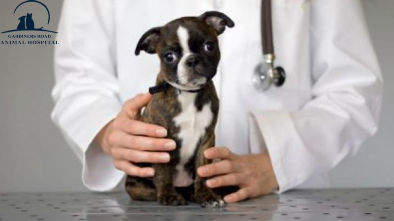 AnimalHospitalInKingston | DentalCleaningsKingston |  VetClinicKingston | AllergiesInDogKingston | AnimalSKinProblems | PetEmergencyCareKingston | PetXRayKingston |  PetNutritionKingston |  VetsInKingston | ParasiteControlService | PetDentistryKingston | SpayAndNeuterKingston | AnimalSkinProblems | AnimalAllergiesKingston | EnvironmentalAllergiesInDogsKingston | PetLaboratoryKingston | PetLabKingston | PetDentalCareKingston | PetXrayKingston | PetPharmacyKingston |  EmergencyCareKingston | PetVaccinationKingston | DogDentalCareKingston | PetMicroChipKingston | YearlyHealthExamService | FoodAllergiesInCatsKingston | ParasiteControlServiceKingston | AllergiesInDogsKingston |