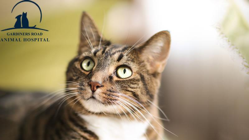 cat-vaccination2