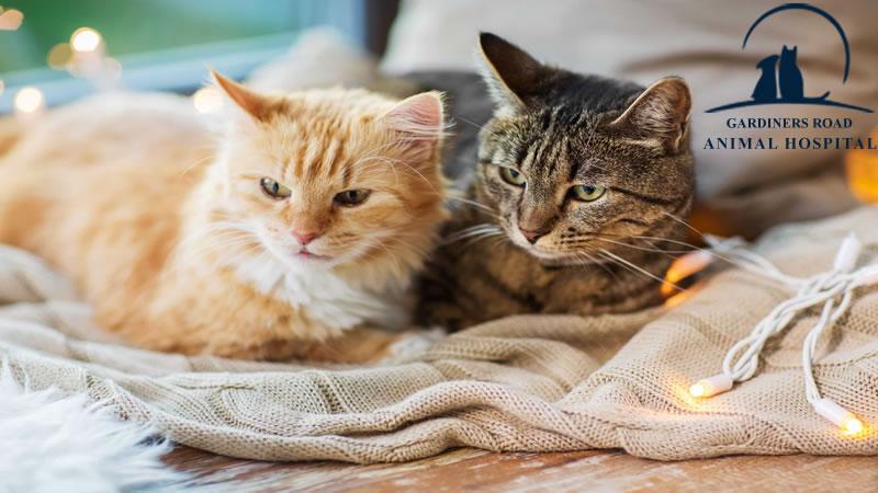 cat-vaccination3