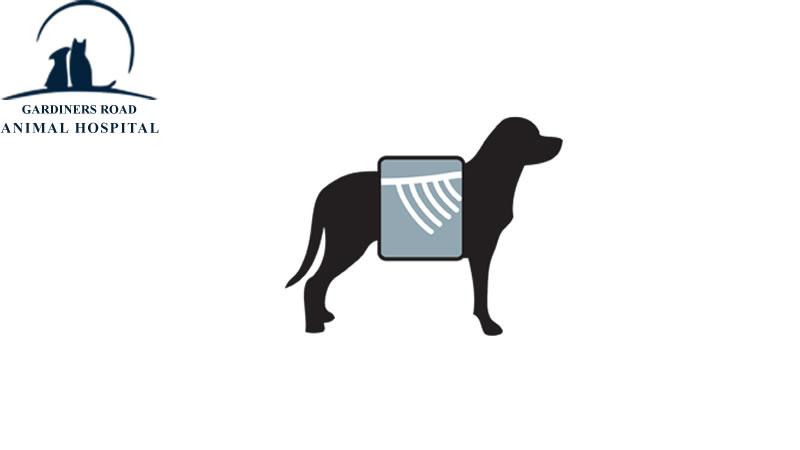dog-x-ray.