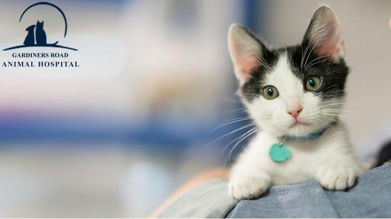 kitten vaccination service