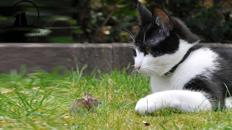 parasite-cat