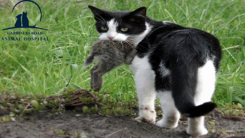 parasite-control-service-cat1