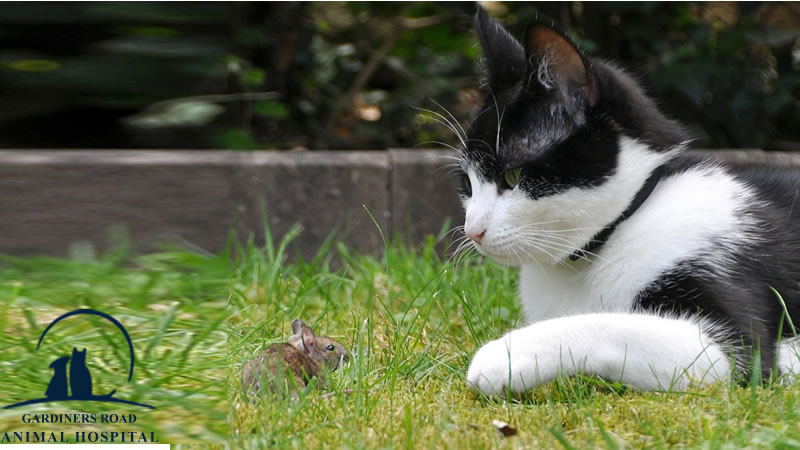 parasite-control-service-cat2