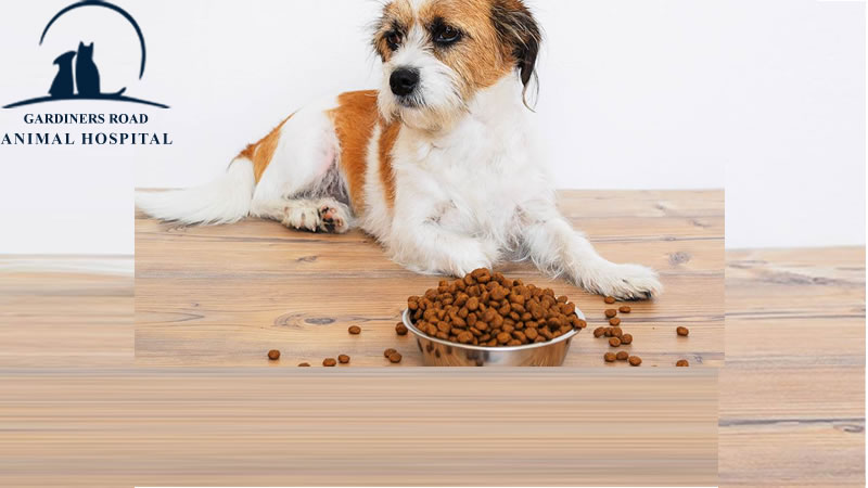 sad-dog-nutriation1