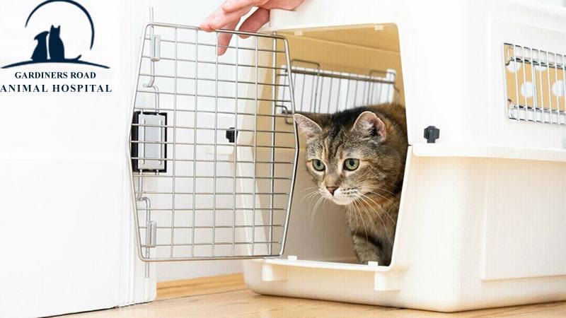 Cat Vaccines Kingston2
