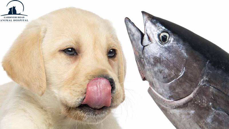 Pet Preventive Care