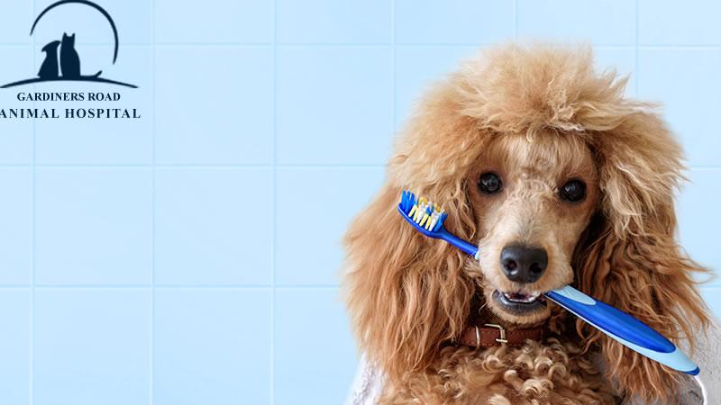 Pet Dental Care Service in Kingston