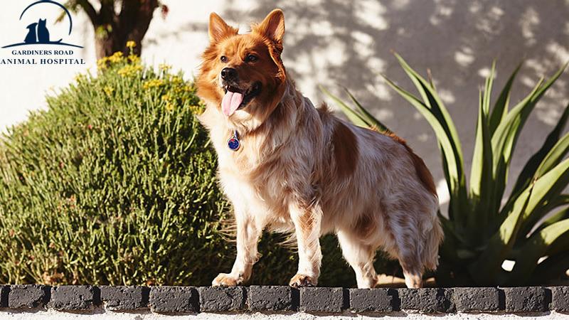 Skin Infection in Dog Kingston4