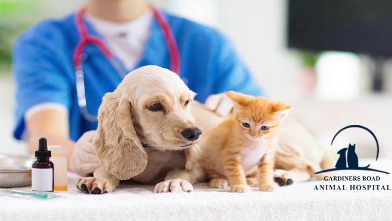 cat-vaccination-dog