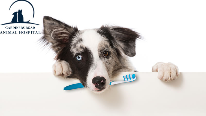 dog Dental Care Service in Kingston