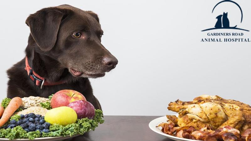 dog-nutrition