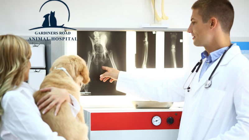 dog-x-ray-service-in-kingston