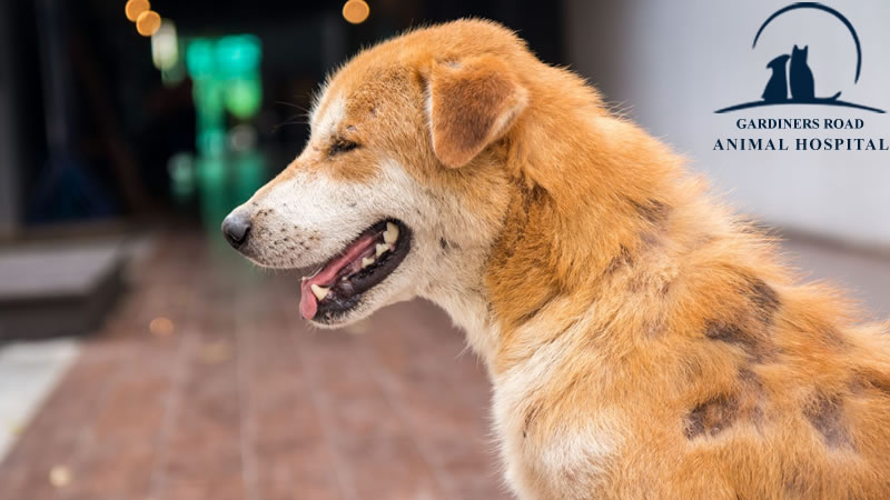 fungal infections in dogs3