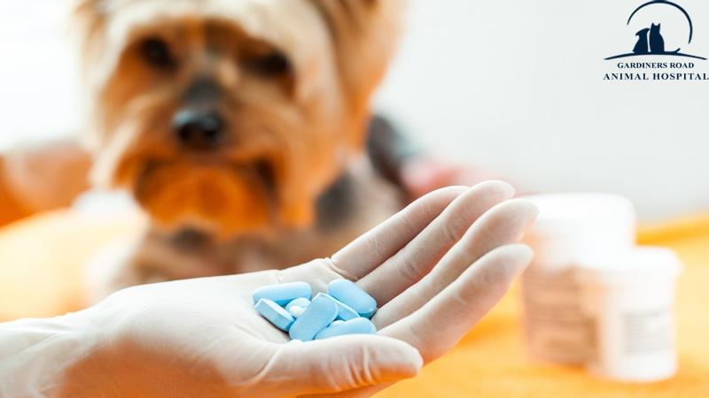 Pharmacy-animal-hospital-Kingston