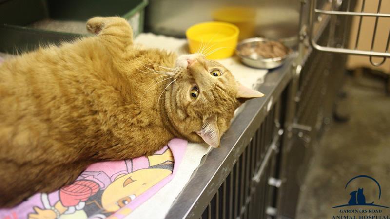 cat-emergency-care-kingston