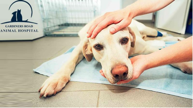 dog-emergency-care