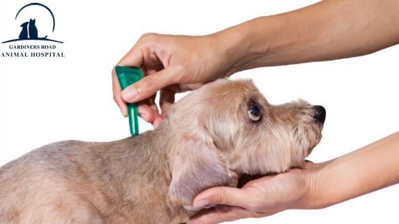 fleas-and-tick-medication