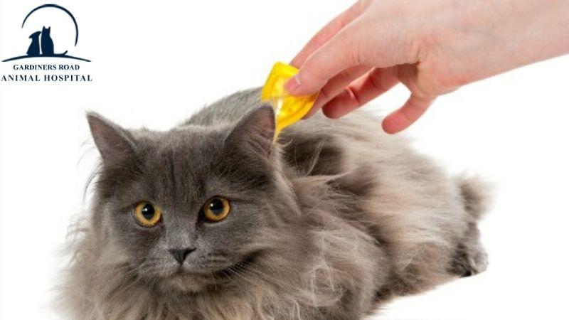 fleas-and-tick-medication1
