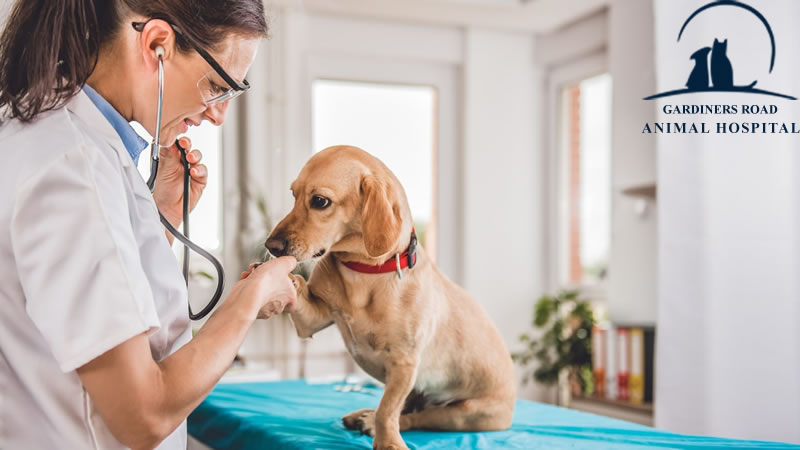 img-making-the-most-of-your-vet-visit4