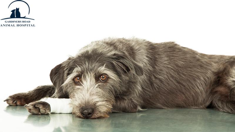 pet-emergency-care-kingston1