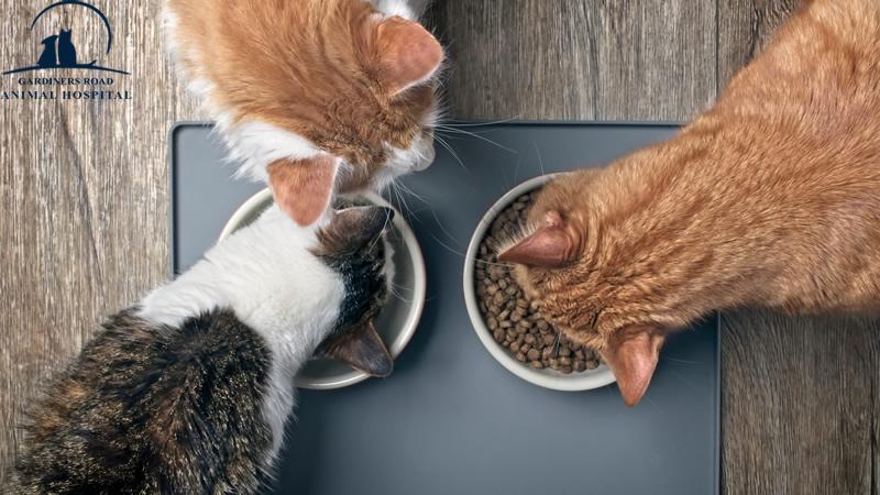 pet-nutrition1