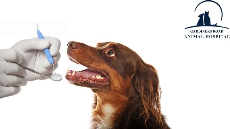 Dentistry-Dental-X-Rays-Service-Kingston