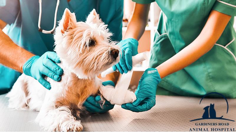 Pet-Emergency-Care-Service