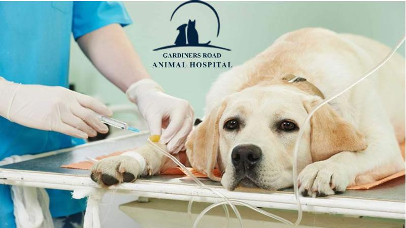 anesthesia-