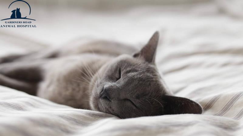 kitten-Vaccinations-Kingston1