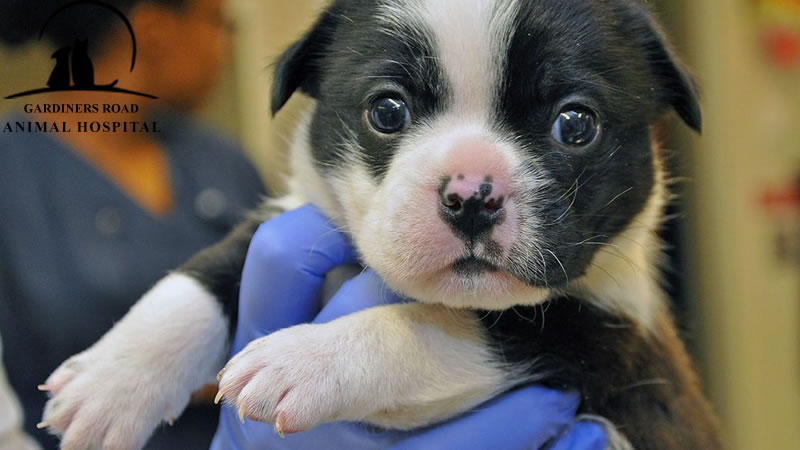 pet-vaccination-service