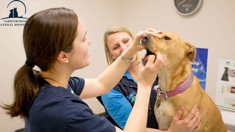 Pet Dentistry Service Kingston: Broken Teeth in Cats